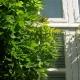 wisteria_24