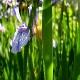 botanisk_10