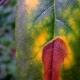 botanisk_have_04