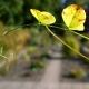botanisk_have_25