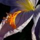 botanisk_have_44
