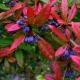 botanisk_have_47