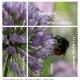 a21_botanisk_09