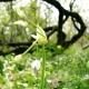 botanisk_03s