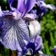 botanisk_10a