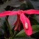 botanisk_20