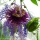 botanisk_21