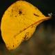 botanisk_have_30