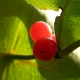 botanisk_have_35