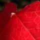 botanisk_have_38