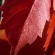 botanisk_have_40