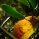 botanisk_have_45