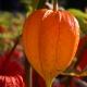 botanisk_have_46