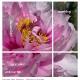 a21_botanisk_08